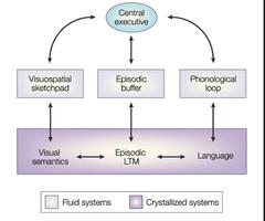Central Executive Processing