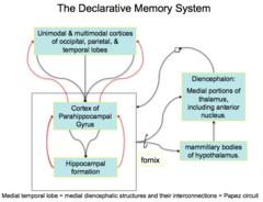 Circuit for declarative memory